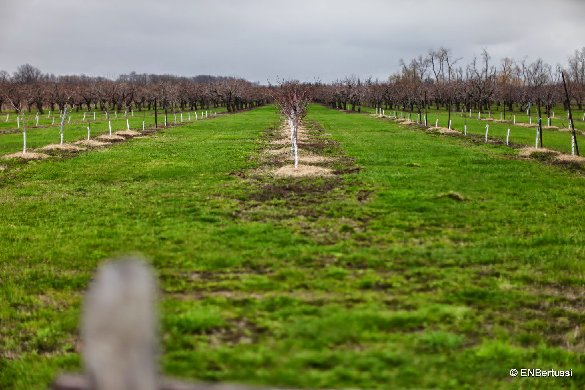Fruit Punch Tree Part - 35: ... Fruit Tree Orchards At Punch Bowl Market And Bakery ...